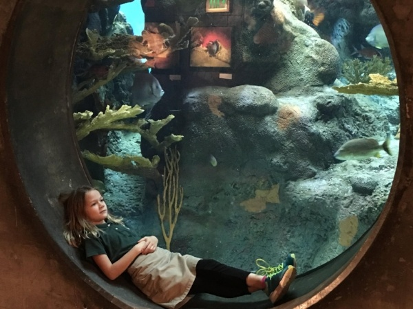 Shorecrest first grade field trip Florida Aquarium